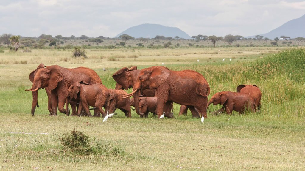 African Elephants at Lake Jipe