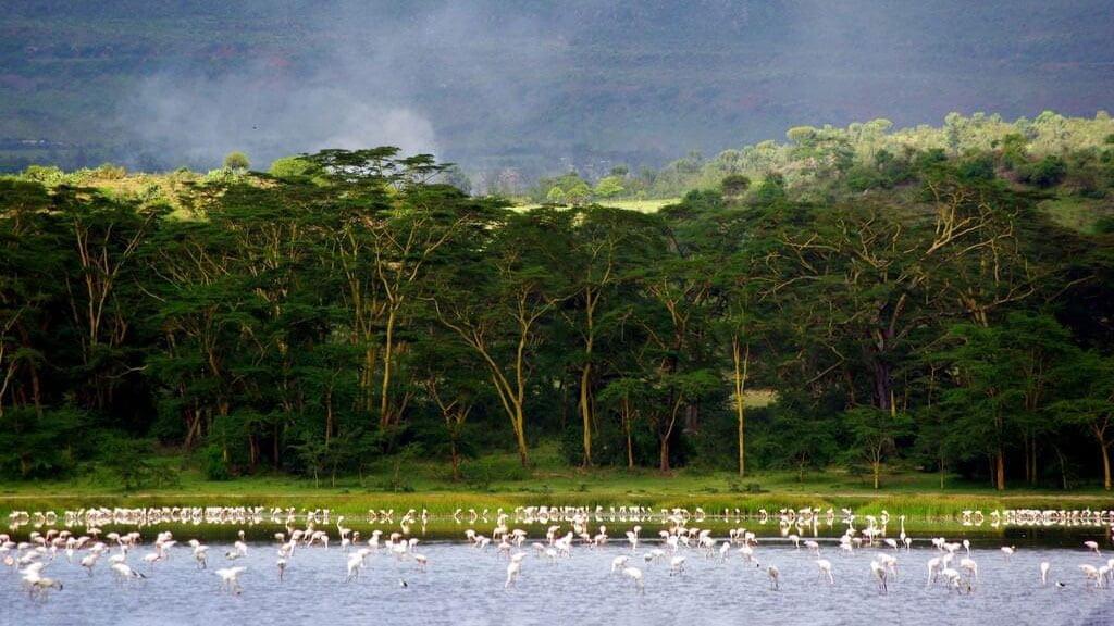 Flamingos at Lake Elmenteita