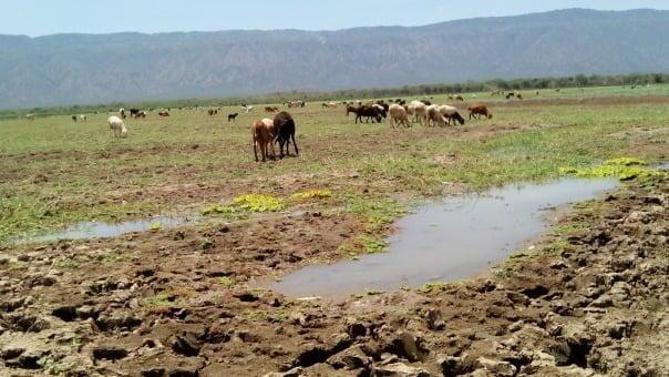 The Dwindle of Kenya's Only Ox-Bow Lake, Lake Kamnarok